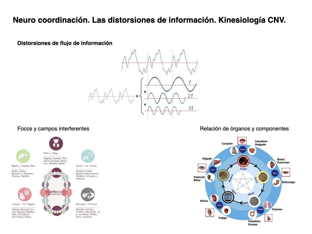 Neuro coordinación. Las distorsiones de información. Kinesiología CNV.